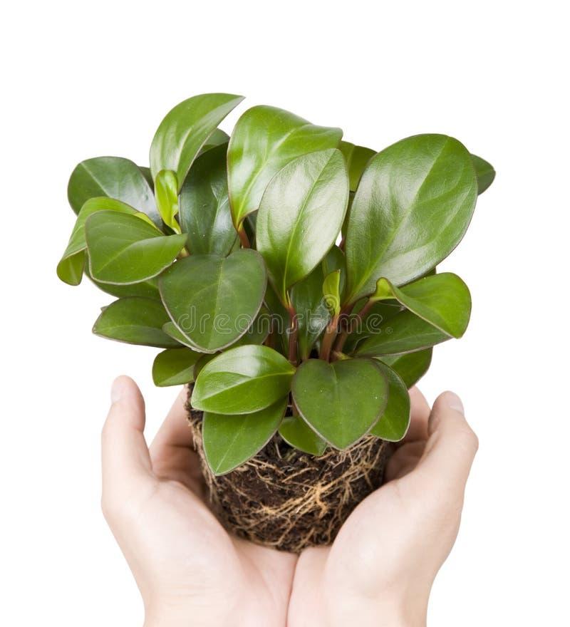 现有量室内植物 免版税图库摄影