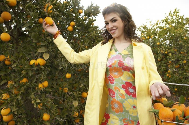 现有量橙色挑选 免版税库存图片