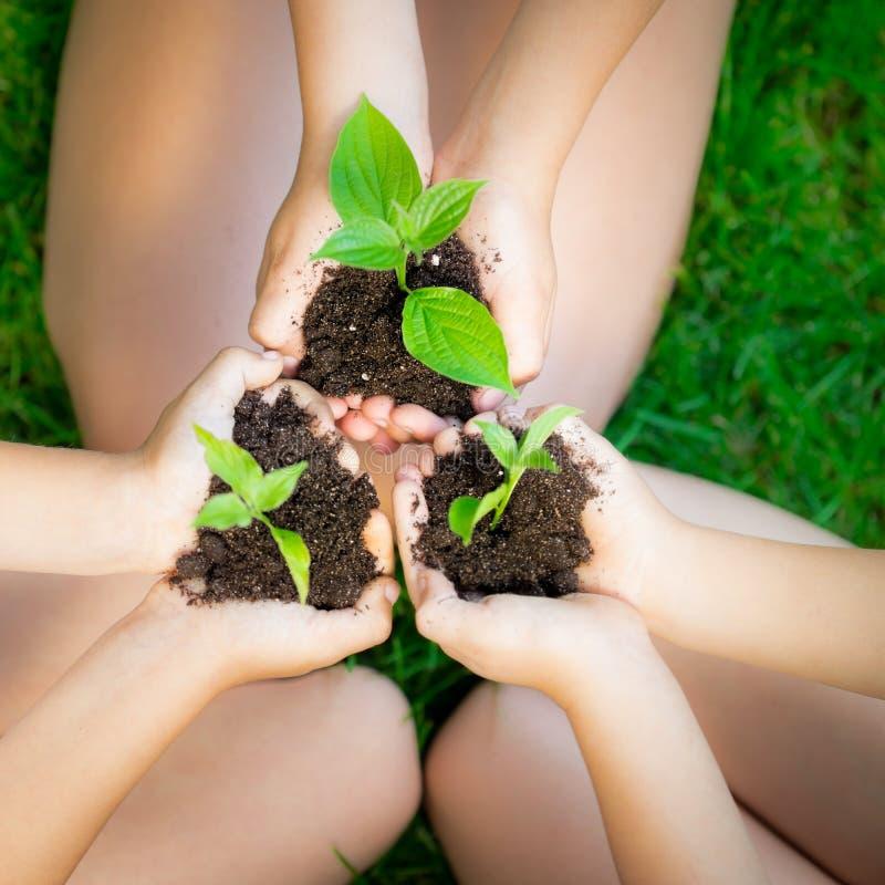 现有量的年幼植物 免版税库存图片