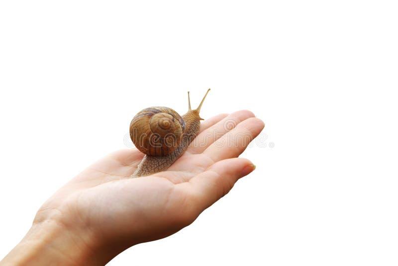 现有量蜗牛 免版税库存图片