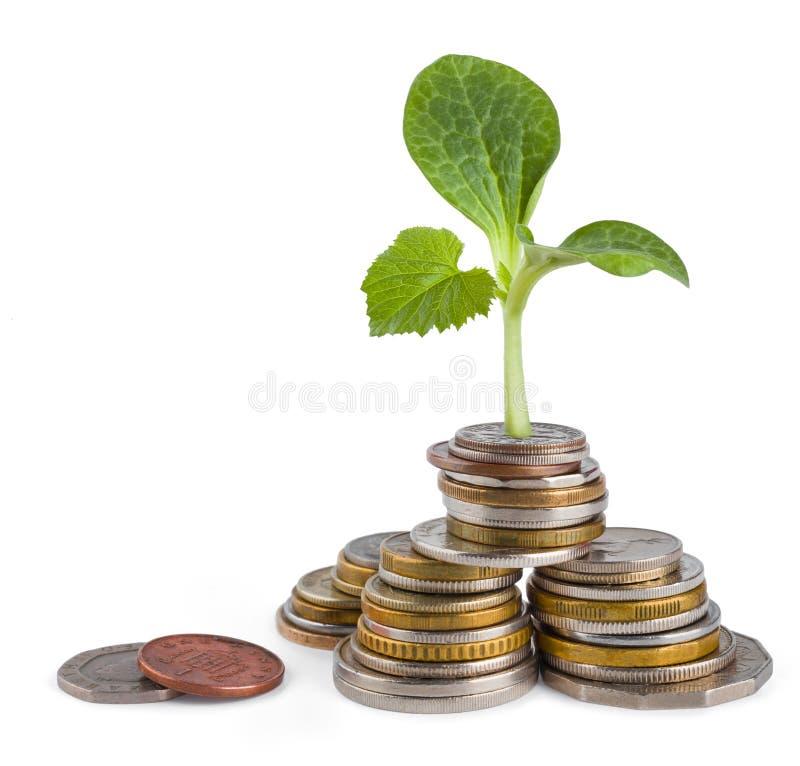 现金上涨或生态概念 免版税图库摄影