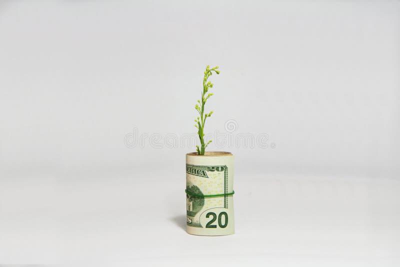 现金上涨,发芽从卷美国钞票的绿色树的概念 免版税图库摄影