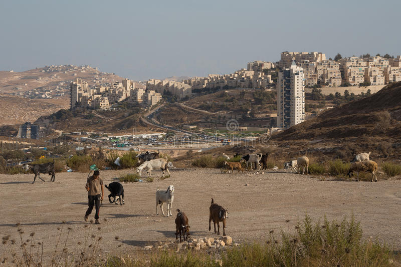 现代牧羊人在以色列 库存照片
