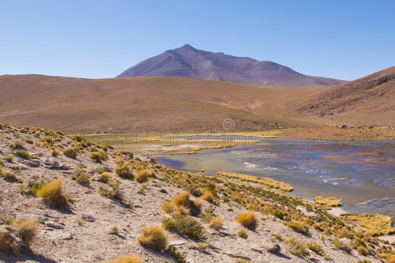 玻利维亚的阿尔蒂普拉诺高原在乌尤尼盐沼盐舱内甲板附近的 令人惊讶的湖自然风景在南美洲 免版税库存照片