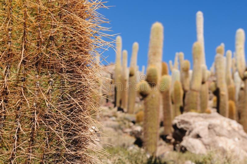 玻利维亚de撒拉尔uyuni 免版税库存照片