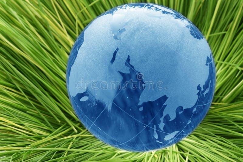 玻璃地球草 库存照片