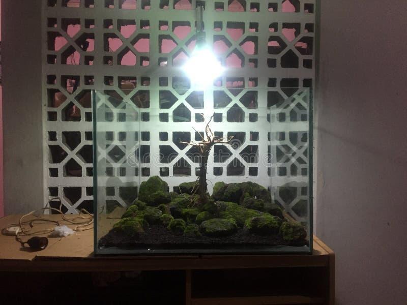 玻璃容器坦克 库存图片