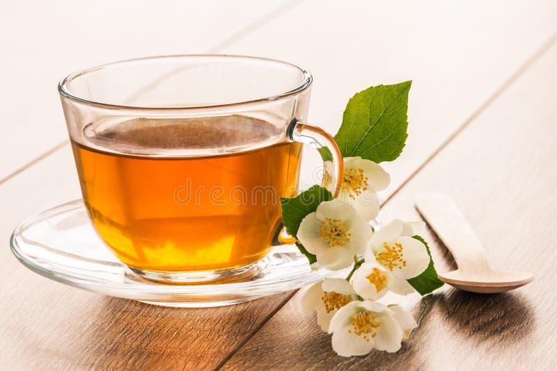 玻璃杯子与白色茉莉花的绿茶开花 库存图片