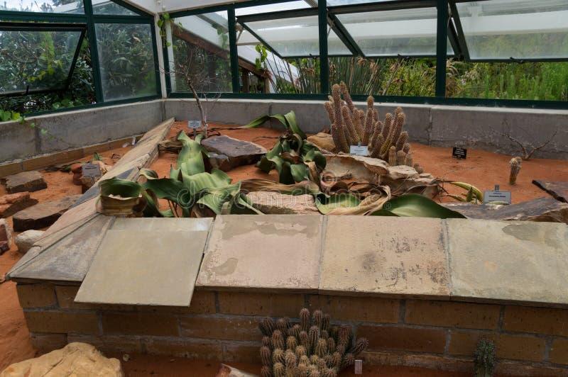 玻璃温室的内部的看法在Kirstenbosch植物园里 库存照片