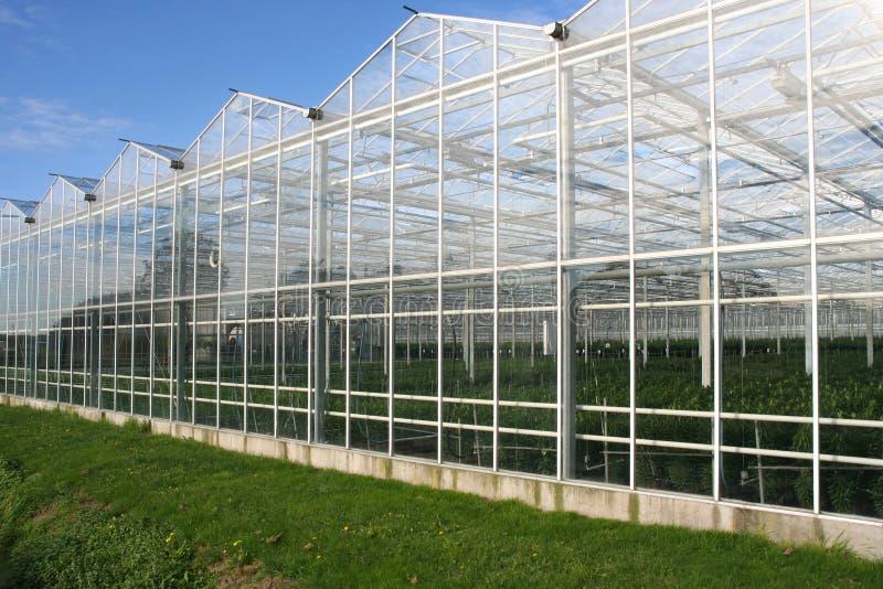 玻璃温室 库存图片