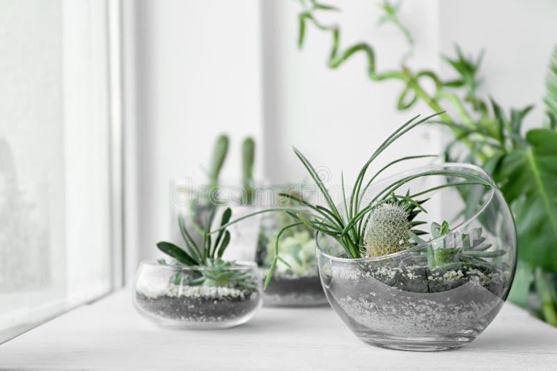 玻璃玻璃容器的微型多汁庭院 免版税库存照片