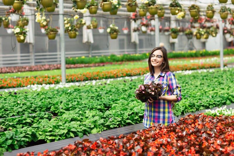 玻璃的美丽的年轻微笑的女孩,有花的工作者自温室 概念工作自温室 r 库存照片