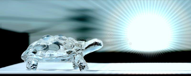 玻璃草龟在明亮的蓝色背景中