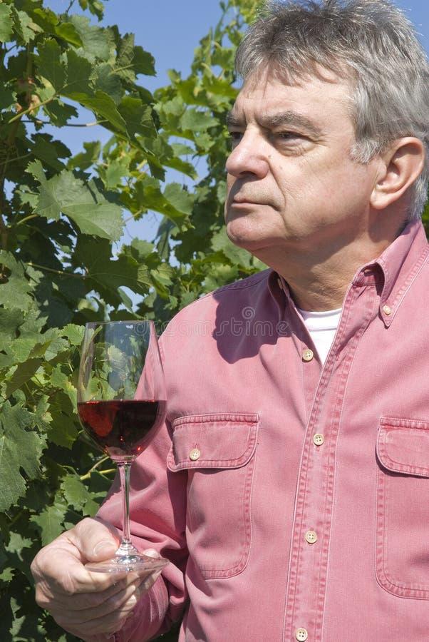 玻璃藏品人红葡萄酒 免版税图库摄影
