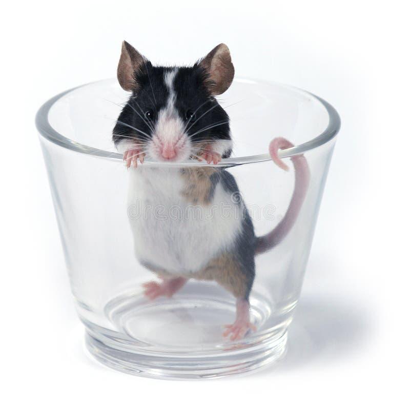 玻璃鼠标 图库摄影