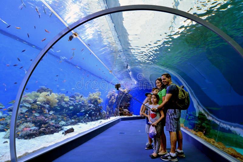 珊瑚世界水下的观测所水族馆鲨鱼水池在Eil 库存图片