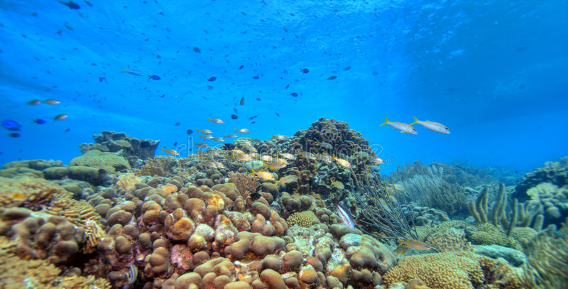 珊瑚全景礁石 库存照片