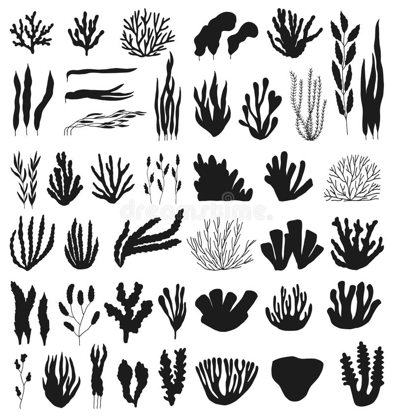 珊瑚和海藻大传染媒介剪影集合 查出在白色 库存例证