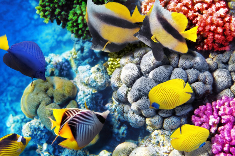 珊瑚和鱼在红海。埃及,非洲。 免版税库存图片