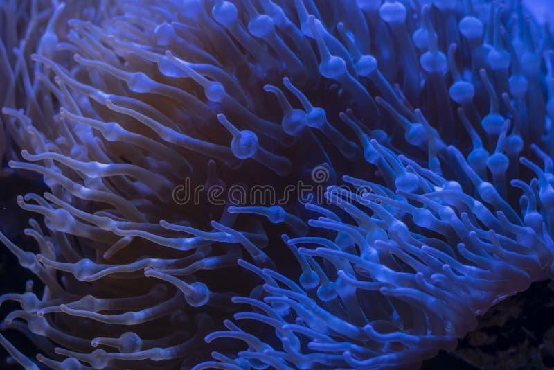 珊瑚在水下的热带海 库存照片