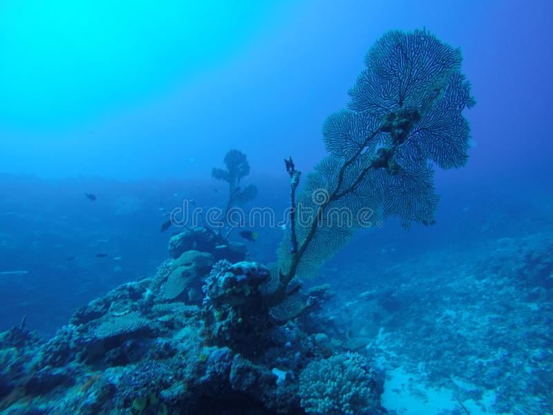 珊瑚在泰国 免版税库存照片