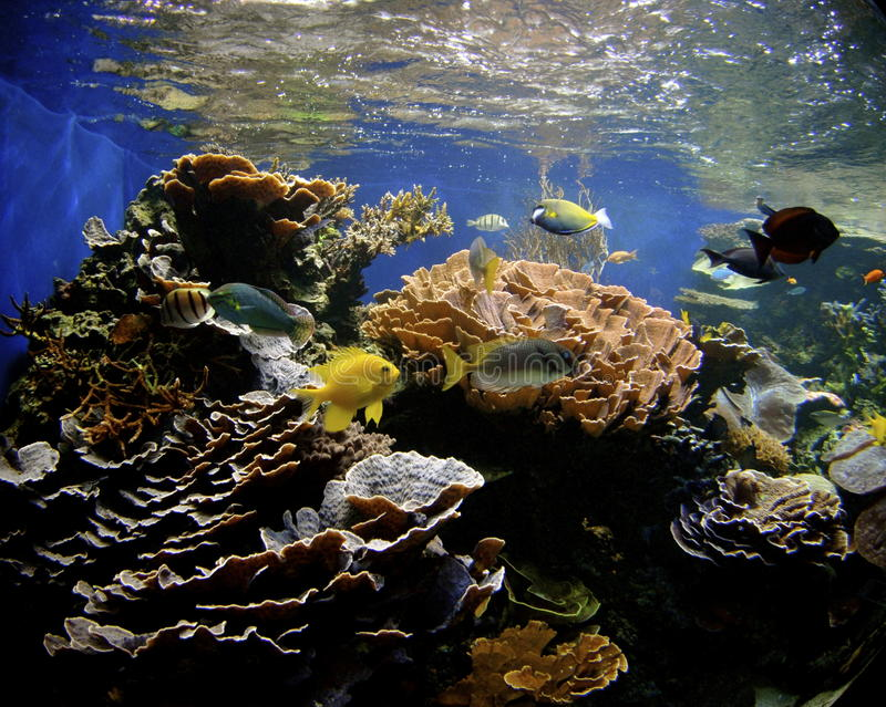 珊瑚夏威夷礁石 库存图片