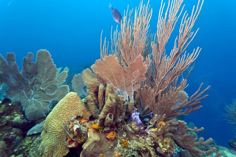 珊瑚庭院 免版税库存照片