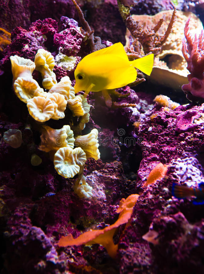 珊瑚异乎寻常的鱼礁石 库存照片