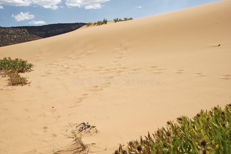 珊瑚桃红色沙丘的交叉路 图库摄影