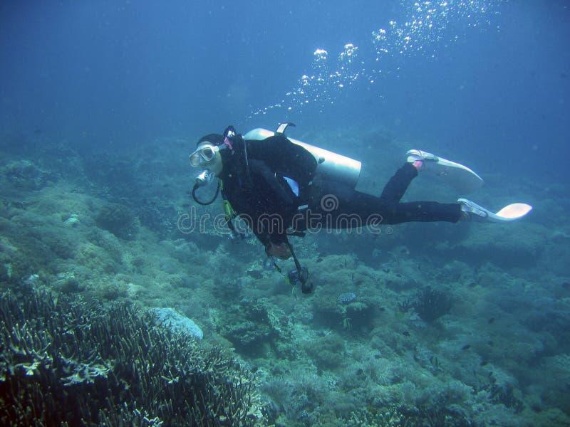珊瑚潜水员测试礁石水肺 库存照片