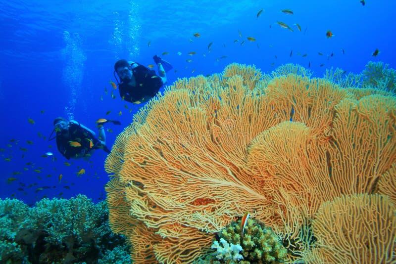 珊瑚潜水员测试礁石水肺 图库摄影
