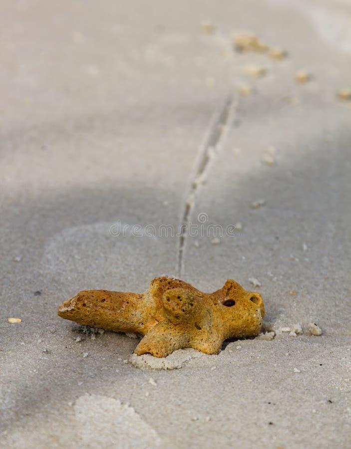 珊瑚片断在卡塔普吉岛海滩,泰国沙子说谎  免版税库存照片