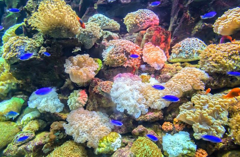 珊瑚生态系本质上 免版税库存图片