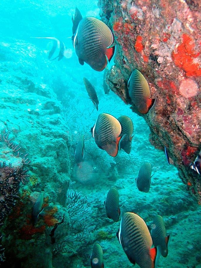 珊瑚生活礁石海运 免版税库存图片