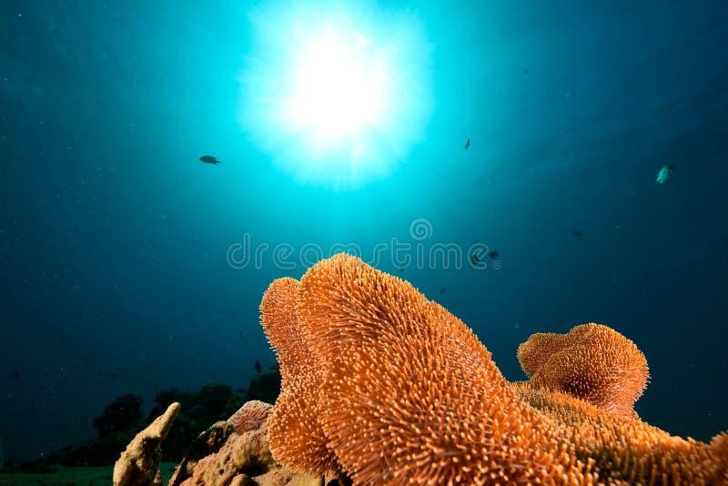 珊瑚皮革粗砺 免版税库存照片