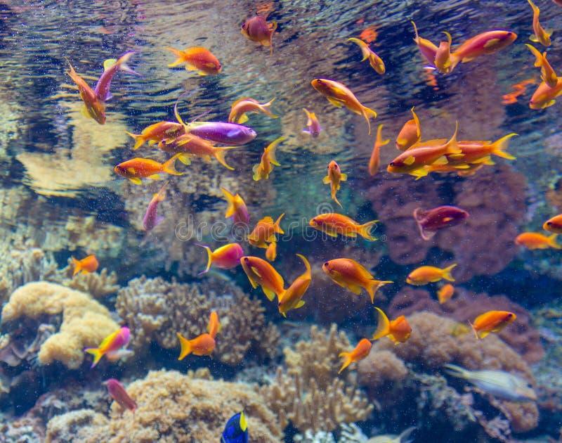 珊瑚礁和热带鱼在阳光下图片