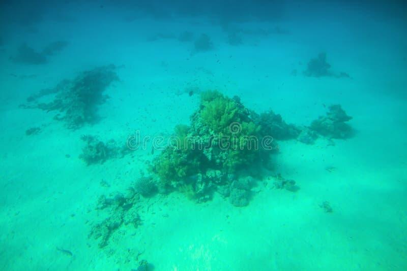 珊瑚礁和鱼在红海 库存图片