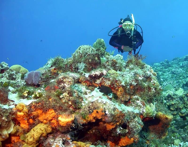 珊瑚礁潜水者 库存图片