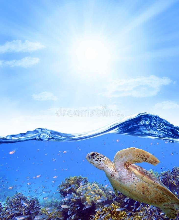 珊瑚礁鱼乌龟海洋天空 库存照片