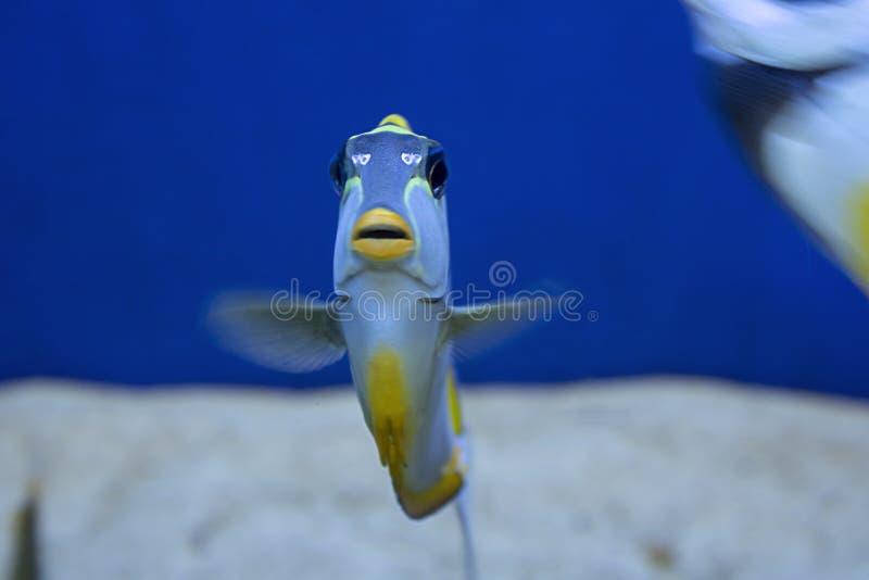 珊瑚礁鱼在水族馆被摄制了 免版税图库摄影
