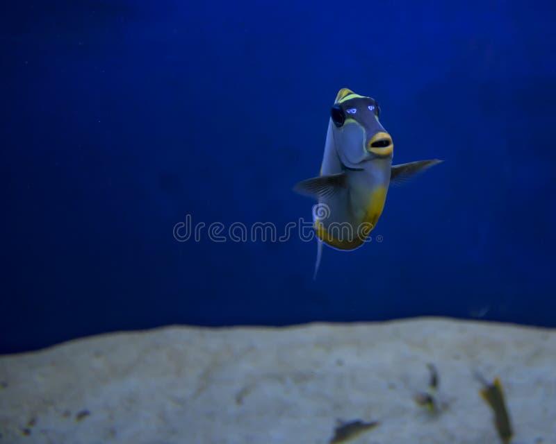 珊瑚礁鱼在水族馆被摄制了 库存图片