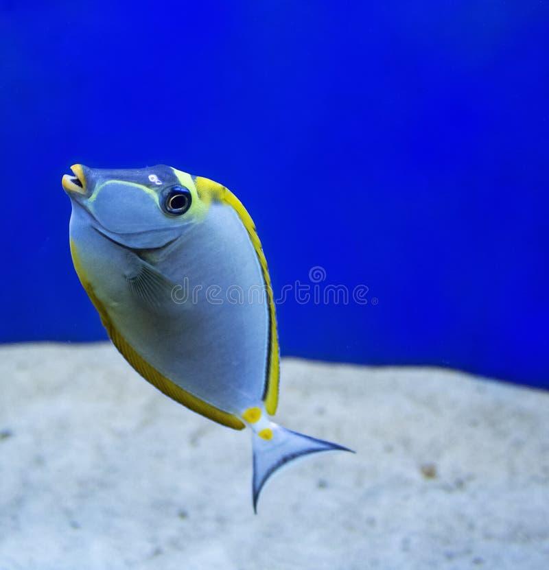 珊瑚礁鱼在水族馆被摄制了 图库摄影