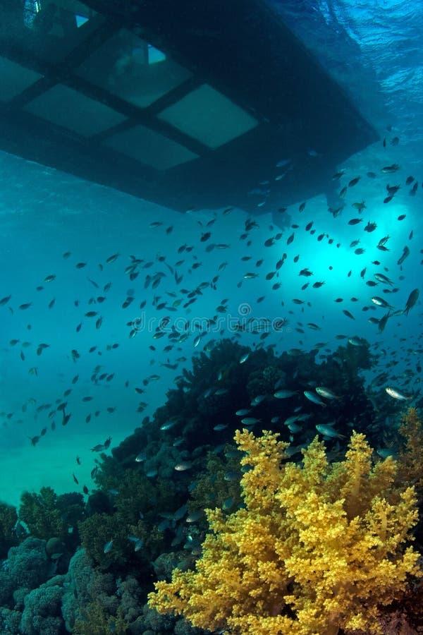 珊瑚礁&玻璃底部小船 免版税图库摄影