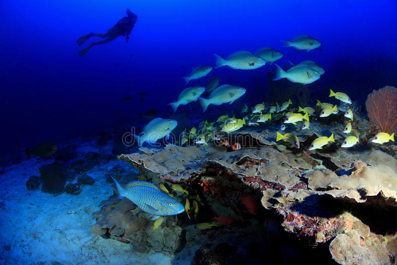 珊瑚礁 库存图片