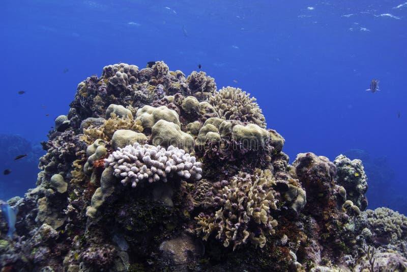 珊瑚礁 免版税库存照片