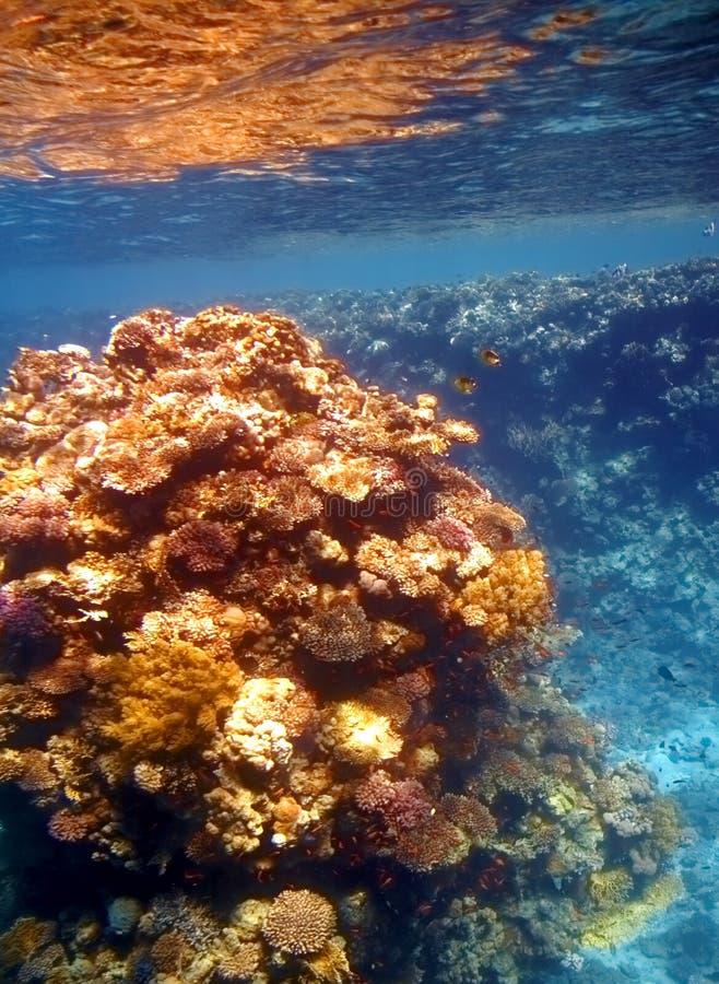 珊瑚红色礁石海运 库存照片