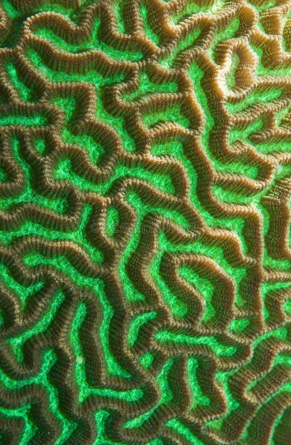 珊瑚绿色纹理 免版税库存照片