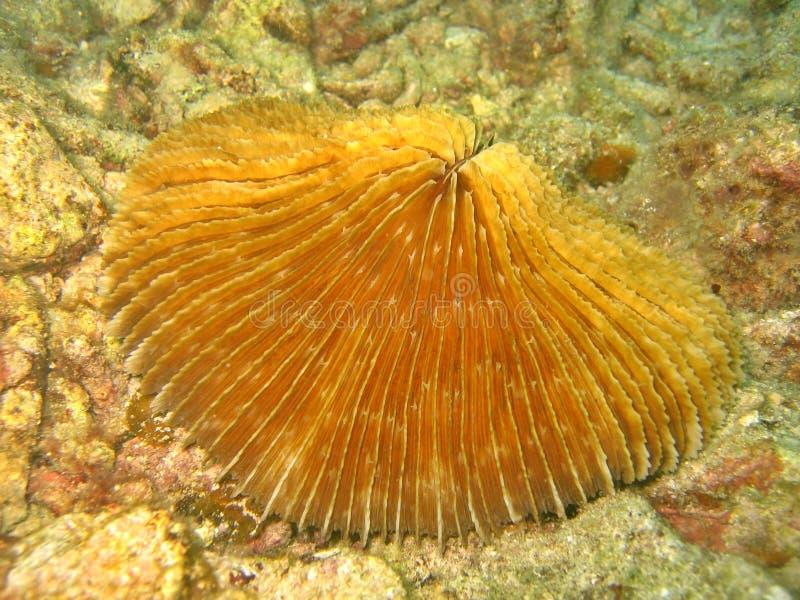 珊瑚蘑菇 图库摄影