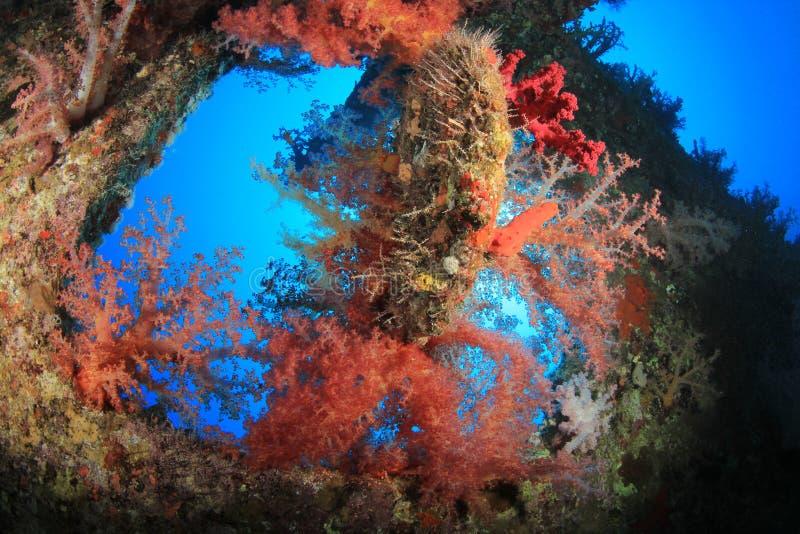 珊瑚被复的海难 库存照片
