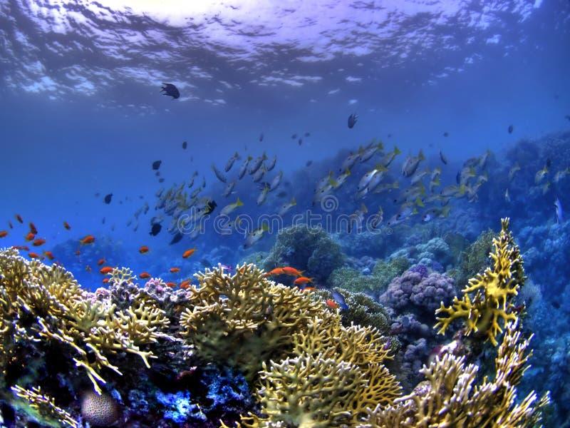 珊瑚钓鱼hdr礁石水下的版本 库存照片